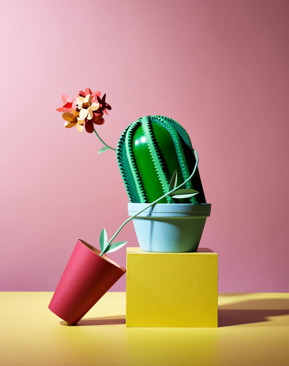 Hattie Newman cactus